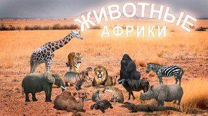 Exotické zvieratá v Afrike