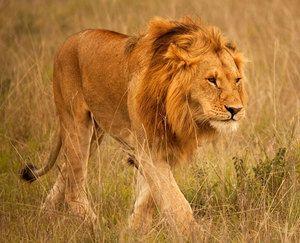 Zvieratá žijúce v Afrike