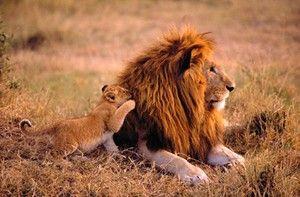 Zvieratá z Afriky
