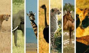 Africké zvieratá