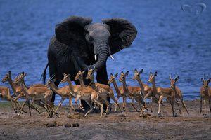 Zvieratá v Afrike