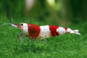 Vlastnosti obsahu akváriových kreviet