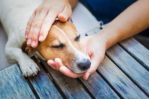 Alergie u psov: príznaky, diagnóza, liečba, prevencia