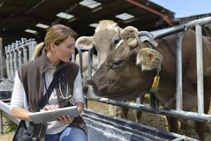 Liečba veľkého hovädzieho dobytka