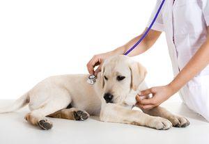 Amoxicilín pre zvieratá