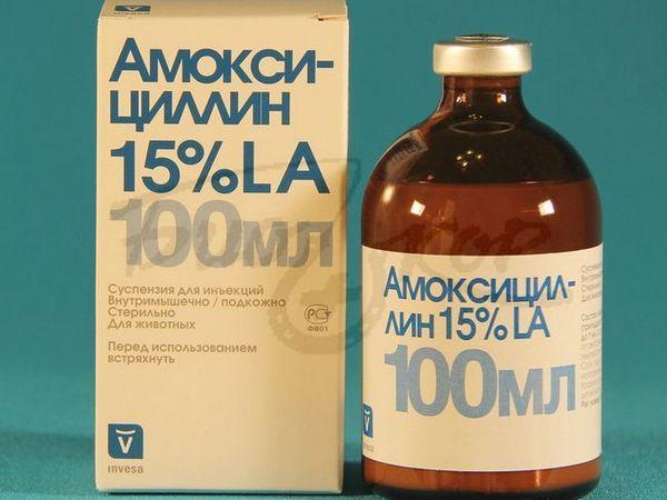 Amoxicilín 100 ml