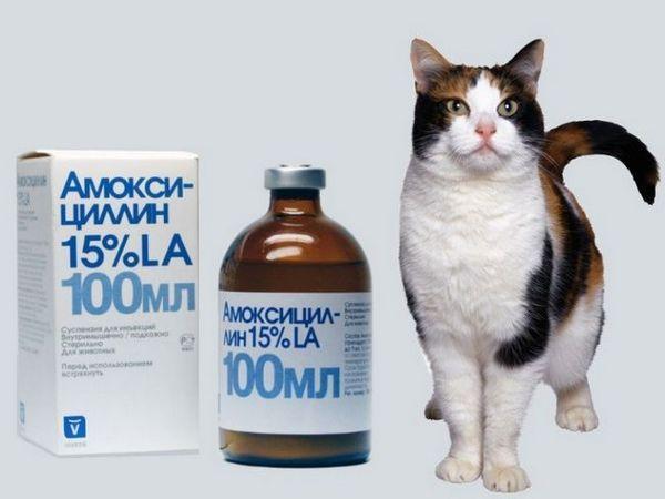 Suspenzia amoxicilínu