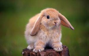 Lieky pre králiky