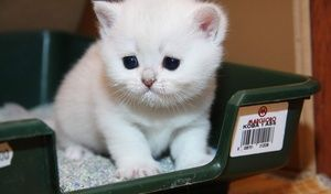 Biele mačiatko na zásobníku