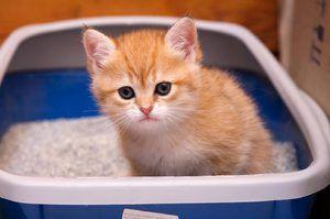 Mačiatko v zásobníku