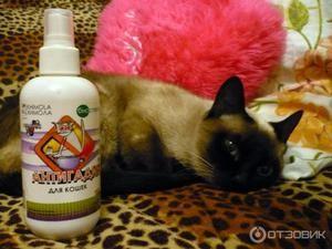 Antigadín pre mačky