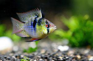 Ryby v akváriu