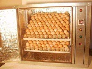 Automatický inkubátor - čo je
