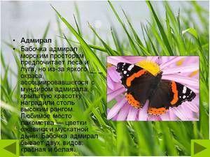 Butterfly charakteristická Admirál