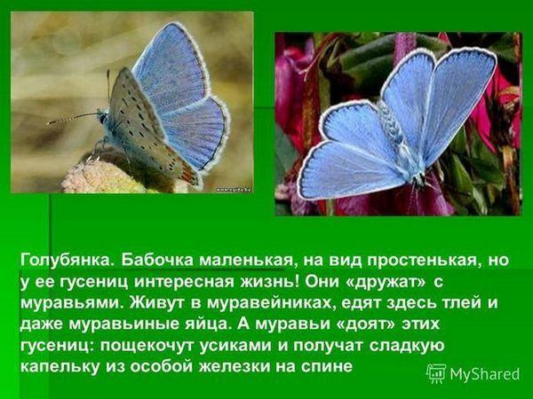 Kde motýľ žije admirál