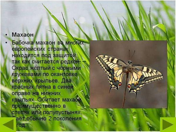 Farebný motýľ admirál