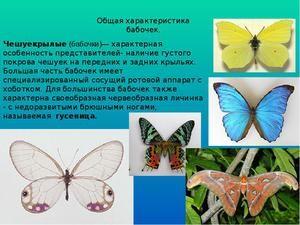 Nepriatelia motýľov