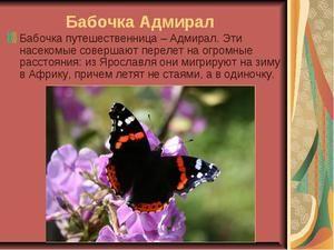 Farebný motýľ