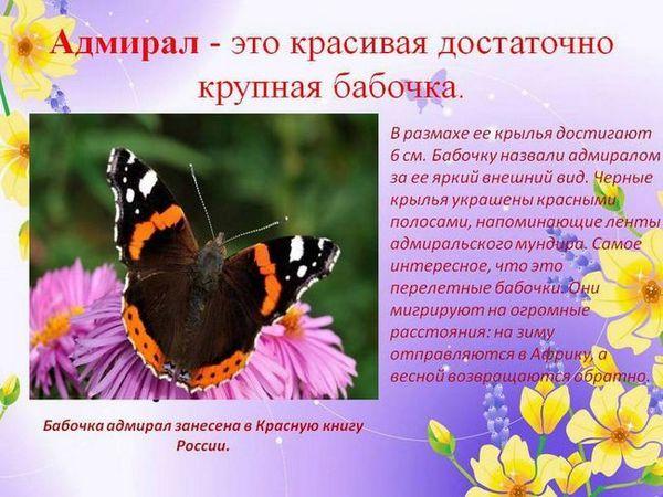 Butterfly admirál