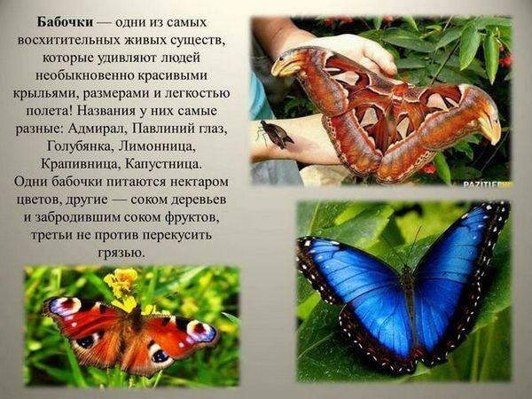 Vzhľad motýľa