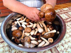 Ako pripraviť huby na kosenie