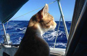 Trojfarebná kočka-cestovateľ