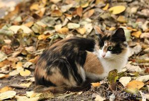 Stretnutie s trojfarebnou mačkou - na šťastie