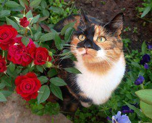 Sladké trojfarebné mačky a kvety
