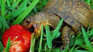 Čo korytnačky jedia v prírode a doma