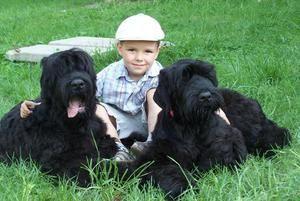 Dieťa a pár priateľov-teriérov
