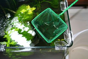 Pravidlá pre čistenie akvária