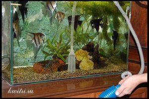Ako čistiť akvárium sami