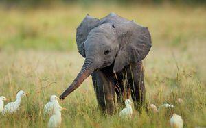 Čo slony jedia v zajatí a vo voľnej prírode
