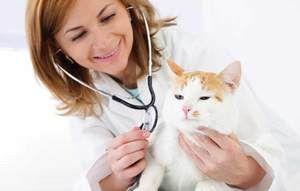Na recepcii s veterinárom