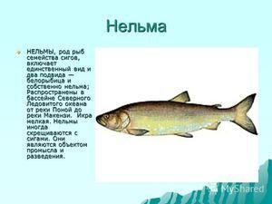 Charakteristika rýb