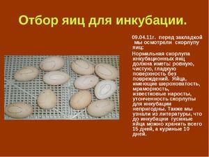Ako na vajcia vajec