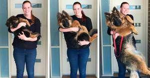 Až do akej vekovej skupiny psoch rastie, fyziologický vývoj
