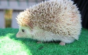 Dom pre trpaslíka ježka