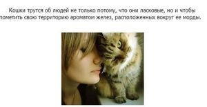 Fakty o mačkách: zaujímavá biológia, celebrity a legendy