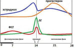 FSG - príčiny zvýšenia a zníženia, ako zvýšiť alebo znížiť hormón