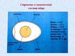 Zloženie vajec