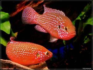 Akváriové ryby