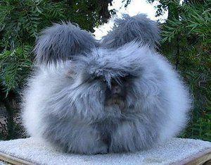 Aké sú názvy králikov