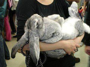 Výber mena pre králika