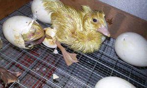 Inkubácia domu
