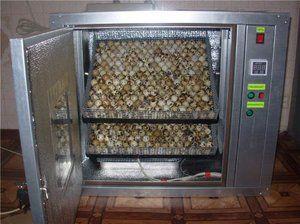 Ako urobiť Irkubator pre prepelice