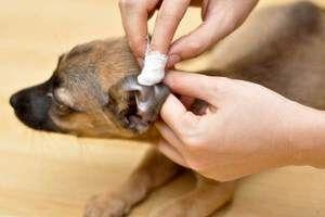 Návod na použitie Funkcia pre psy a mačky