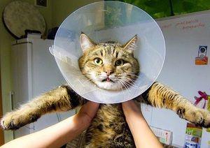 Špeciálne pokyny na použitie lieku Fungin na liečbu psov a mačiek