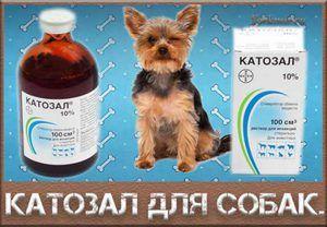 Príprava rezačky psov