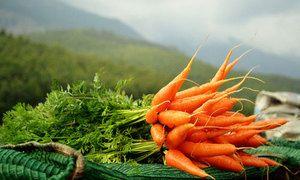 Čo si sníva mrkva snov?
